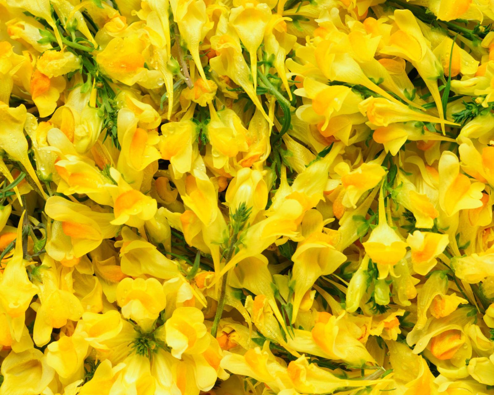 Фотки желтого цвета