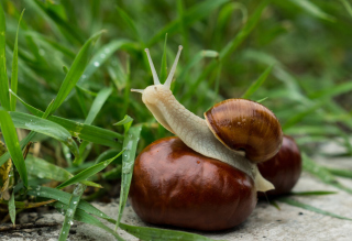Snail In Grass Wallpaper for Android, iPhone and iPad