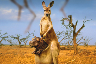 Free Kangaroo and Hippopotamus Picture for Android, iPhone and iPad