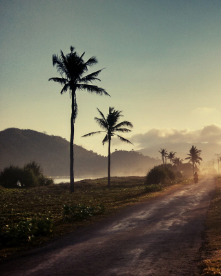 Free Hills with Palms Picture for 240x400