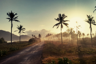 Hills with Palms Background for Android, iPhone and iPad