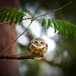 Cute And Funny Little Owl With Big Eyes - Fondos de pantalla gratis para iPad mini