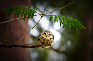 Cute And Funny Little Owl With Big Eyes papel de parede para celular