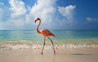 Pink Flamingo Picture for Android, iPhone and iPad