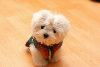 Cute Little Dog Picture for 1080x960