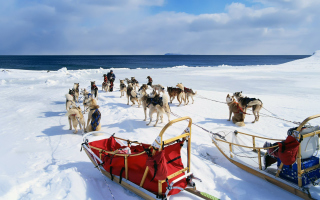 Alaska Dog Sleds Background for Android, iPhone and iPad