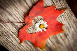 Kostenloses Macro Leaf and Flower Wallpaper für Android, iPhone und iPad