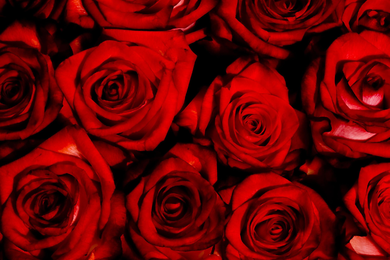Обои На Телефон Андроид Розы