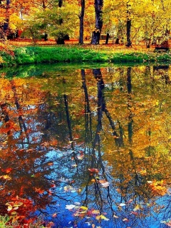 Autumn pond and leaves screenshot #1 240x320