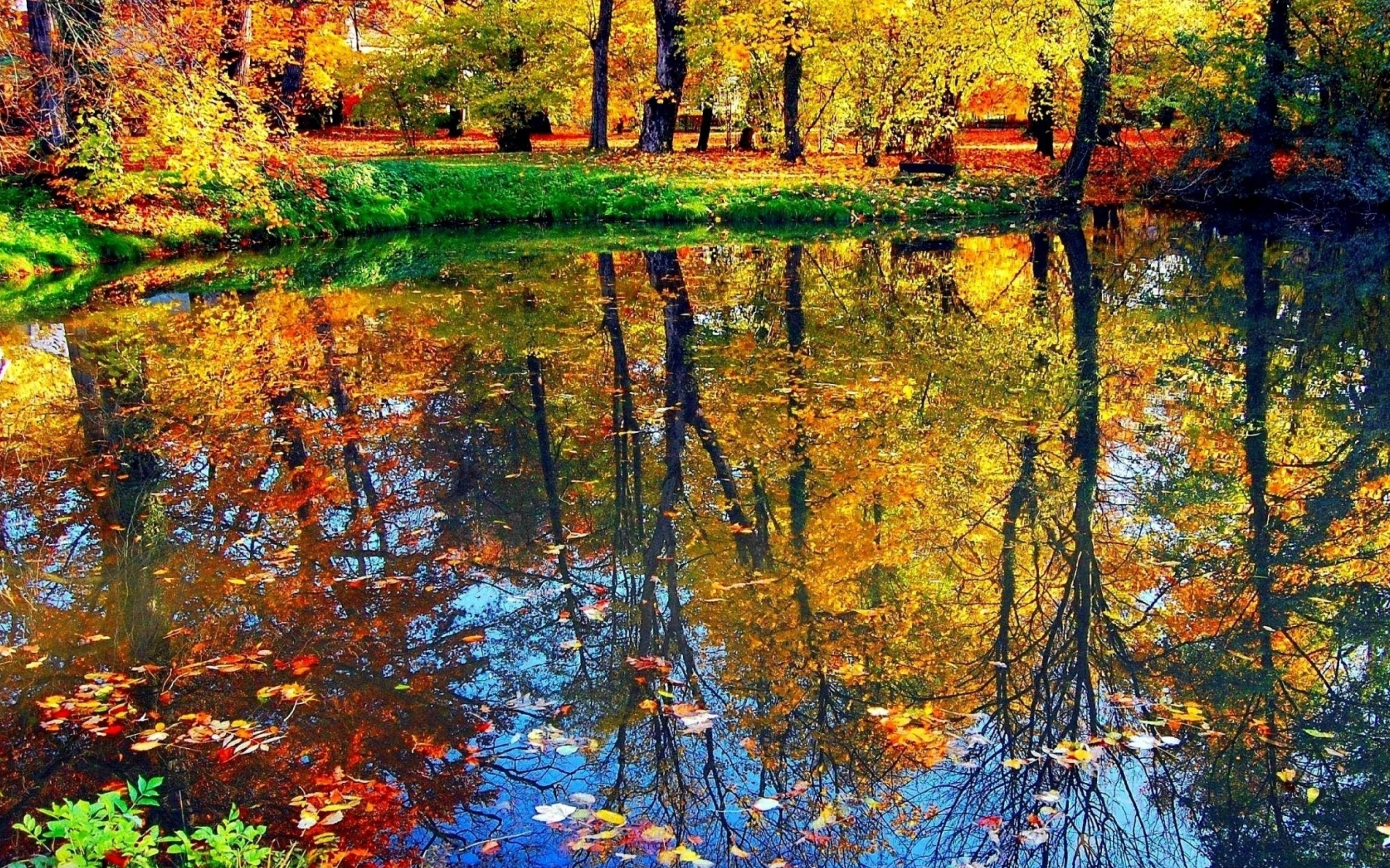 Screenshot №1 pro téma Autumn pond and leaves 2560x1600