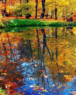 Autumn pond and leaves papel de parede para celular para Nokia Lumia 925