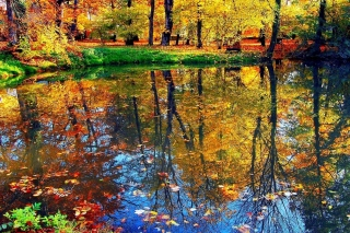 Kostenloses Autumn pond and leaves Wallpaper für Android, iPhone und iPad