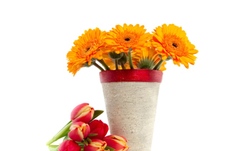 Gerbera Flowers Bouquet Background for Android, iPhone and iPad
