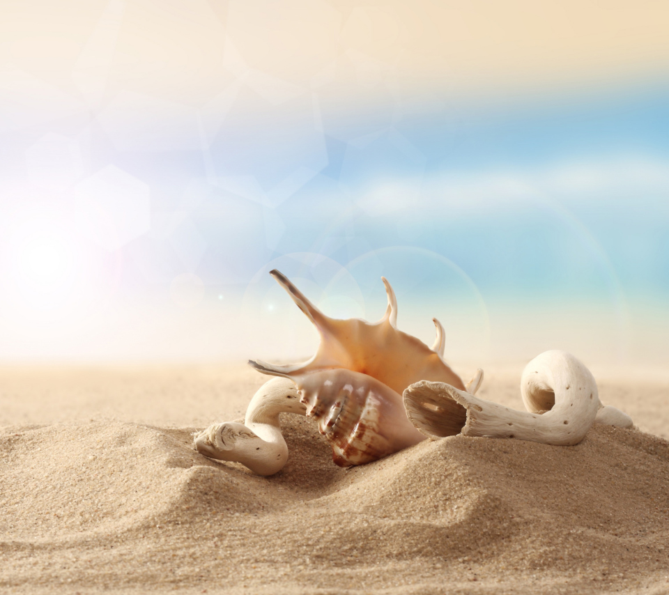 Screenshot №1 pro téma Sea Shells On Sand 960x854