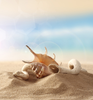 Kostenloses Sea Shells On Sand Wallpaper für 1024x1024