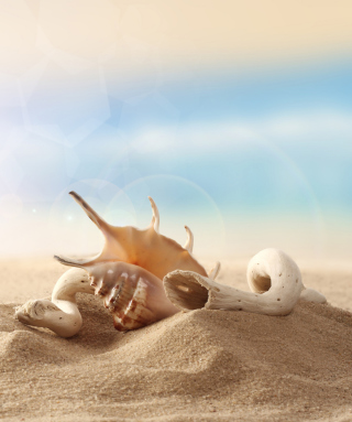 Sea Shells On Sand Wallpaper for Nokia C1-00