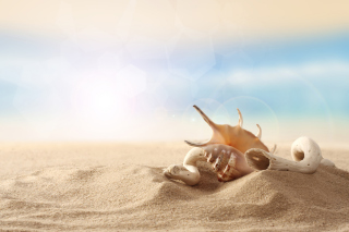 Sea Shells On Sand Wallpaper for HTC Desire 310