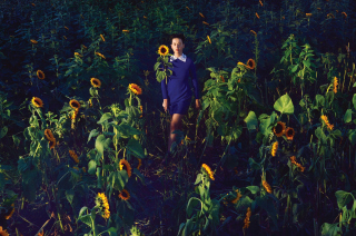 Kostenloses Girl In Blue Dress In Sunflower Field Wallpaper für Android, iPhone und iPad