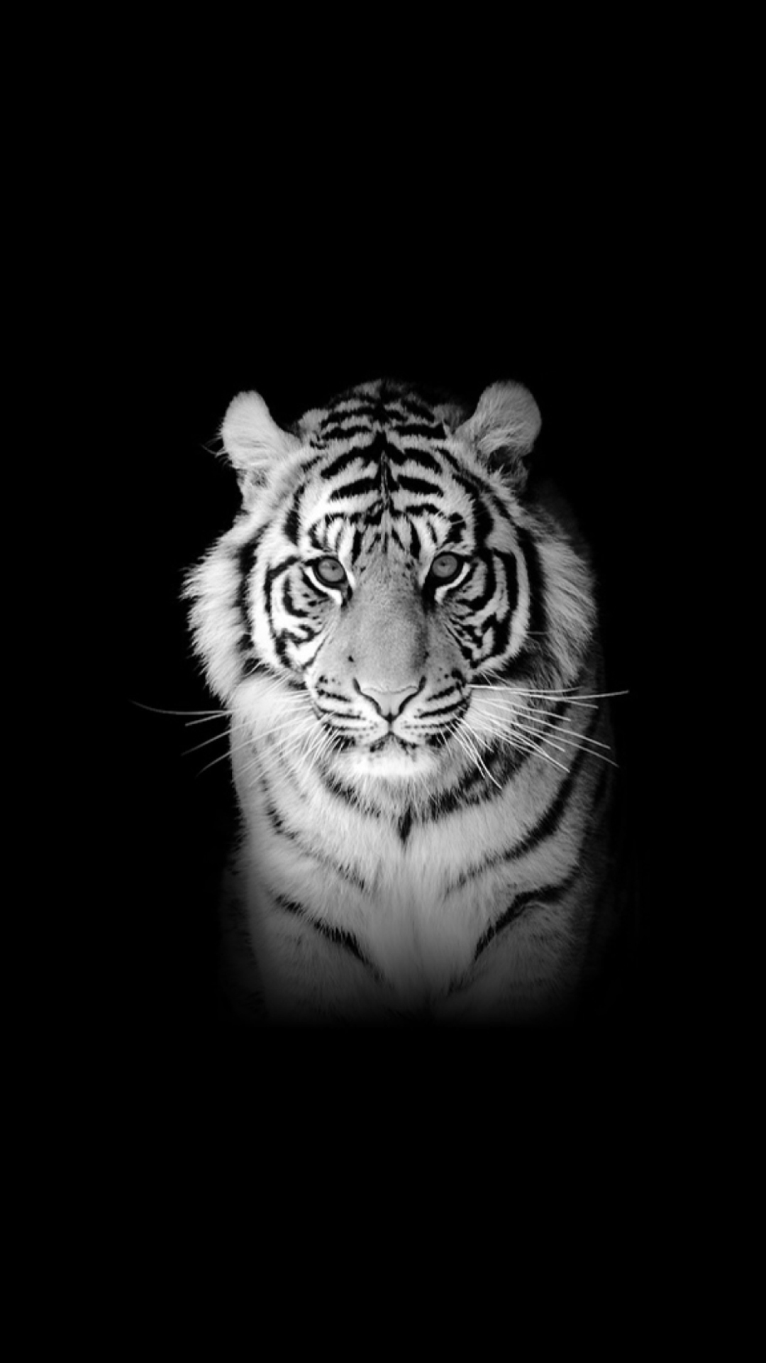 Tiger Wallpaper for 1080x1920