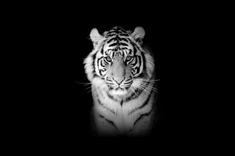 Крутые черно белые картинки на телефон