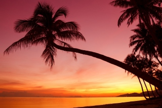 Free Purple Sunset And Palm Tree Picture for Android, iPhone and iPad