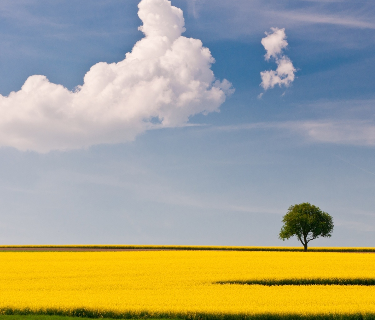 Screenshot №1 pro téma Yellow Field and Clouds HQ 1200x1024