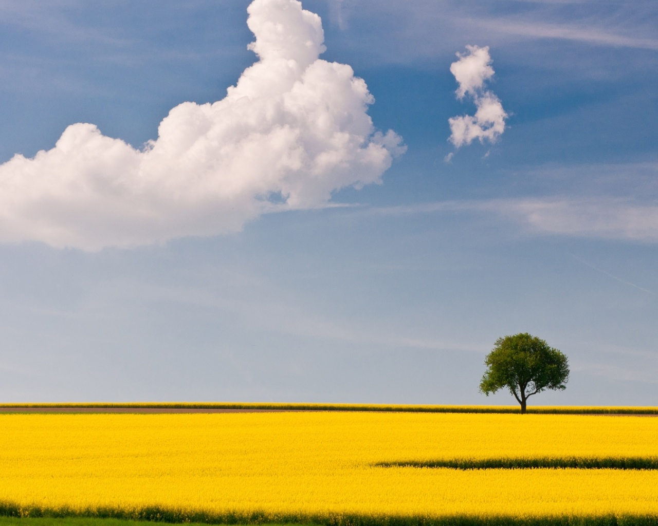 Screenshot №1 pro téma Yellow Field and Clouds HQ 1280x1024