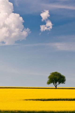 Das Yellow Field and Clouds HQ Wallpaper 320x480