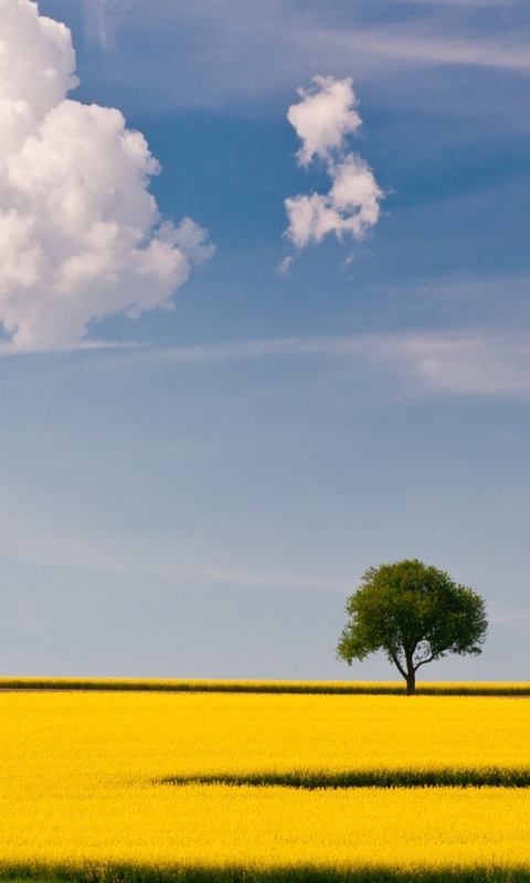 Screenshot №1 pro téma Yellow Field and Clouds HQ 480x800