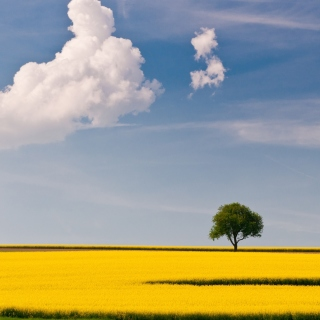 Kostenloses Yellow Field and Clouds HQ Wallpaper für 320x320
