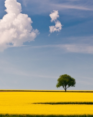 Yellow Field and Clouds HQ Wallpaper for 480x800