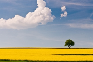 Yellow Field and Clouds HQ Background for Android, iPhone and iPad