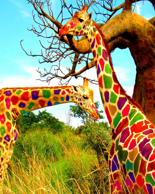 Multicolored Giraffe Family Wallpaper for Nokia C1-01