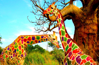 Free Multicolored Giraffe Family Picture for Android, iPhone and iPad