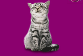 Free Whiskas Cat Picture for Android, iPhone and iPad
