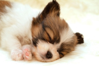 Cute Sleeping Puppy Picture for Android, iPhone and iPad