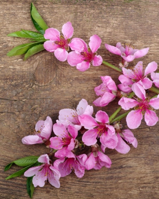 Pink Spring Flowers Background for HTC Titan