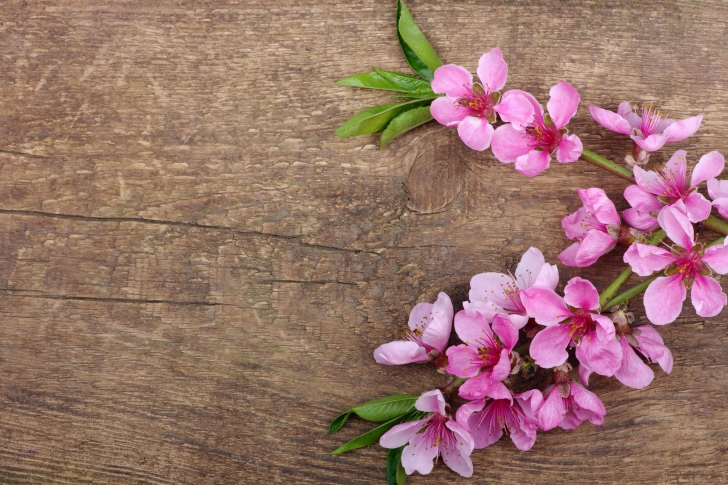Pink Spring Flowers wallpaper