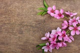 Pink Spring Flowers Background for Widescreen Desktop PC 1920x1080 Full HD