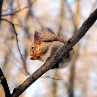 Squirrel with nut - Fondos de pantalla gratis para iPad 2
