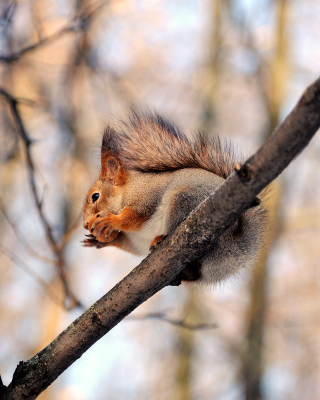 Squirrel with nut - Fondos de pantalla gratis para iPhone 4S