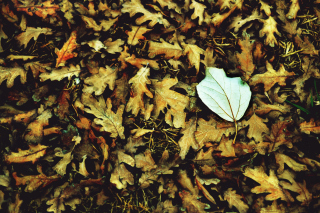 Macro Autumn Leave Picture for Android, iPhone and iPad