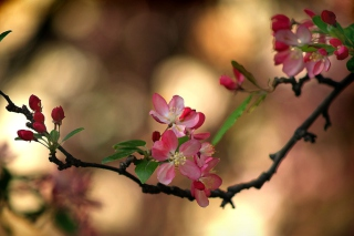 Blooming Branch Wallpaper for Android, iPhone and iPad