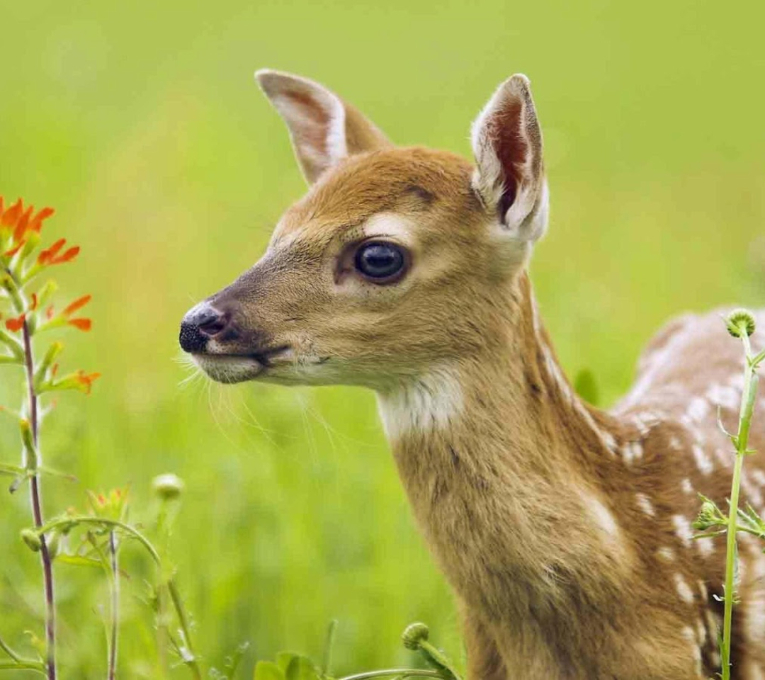 Young Deer para Motorola RAZR XT910