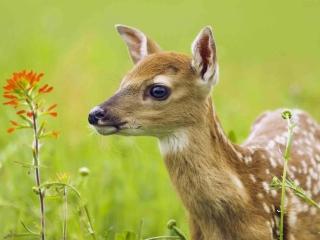 Young Deer para LG 900g