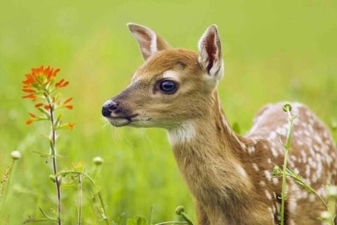 Young Deer para LG E400 Optimus L3
