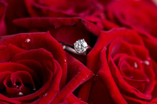 Diamond Ring And Roses Wallpaper for HTC Desire HD