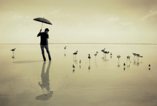 Guy With Umbrella And Bird Lake - Obrázkek zdarma pro 1366x768