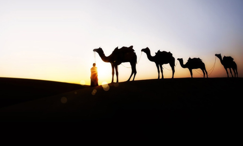 Screenshot №1 pro téma Camel At Sunset 800x480