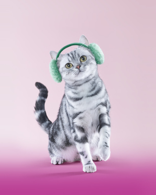 Free Whiskas Cat Picture for 768x1280